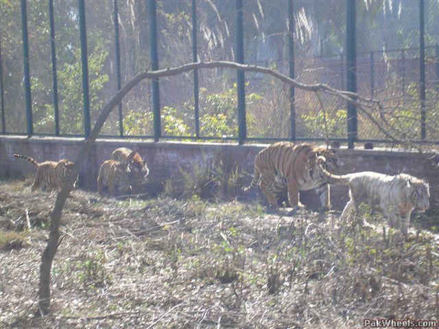 safari park Lahore
