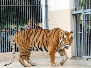 Beauty and enjoyment in Karachi Zoo