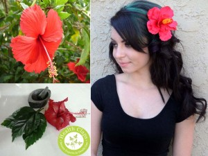 Amazing Hair Care Tips Using Hibiscus Powder