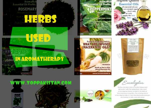 List Of Herbs Used In Aromatherapy